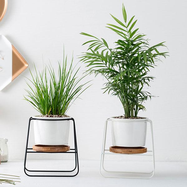 lọ sứ trồng cây