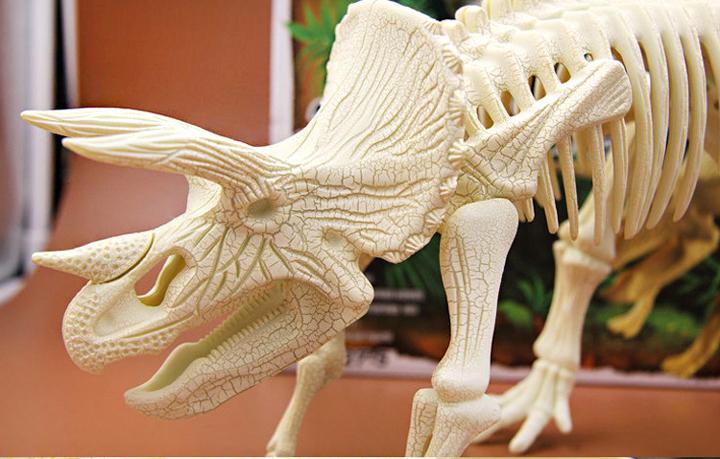 mô hình xương khủng long tại Sài Gòn
