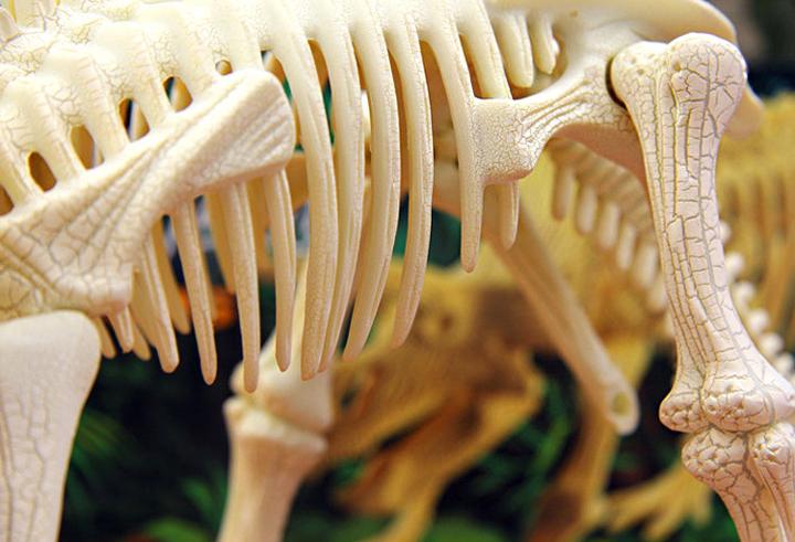 mua lắp ráp xương khủng long ở đâu